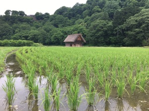 Traditional grass roof house in background